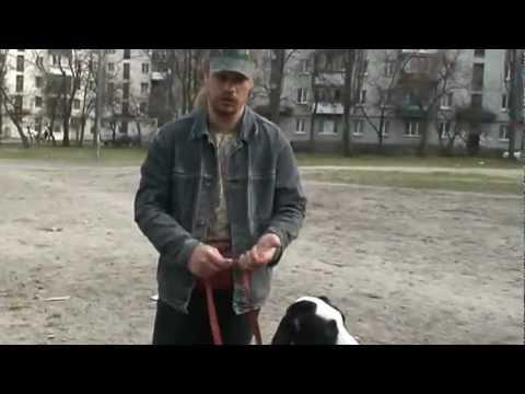 www.komne.com - Как научить собаку команде рядом