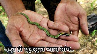 भारत देश का सबसे छोटा सांप और  खूबसूरत साप | Snake rescue and release in forest
