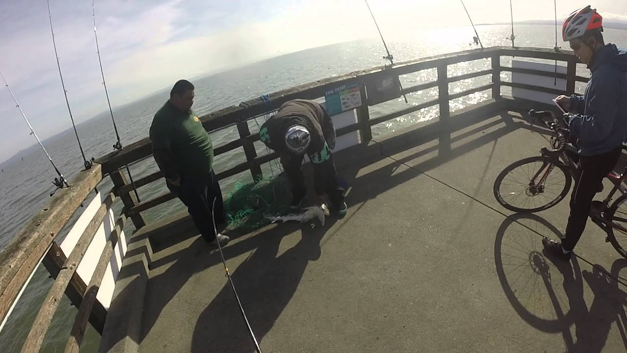 Pier fishing in san francisco