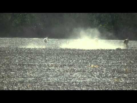Caza de liebres con galgos 2014
