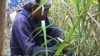 ALABAK KADALAI - practical movie