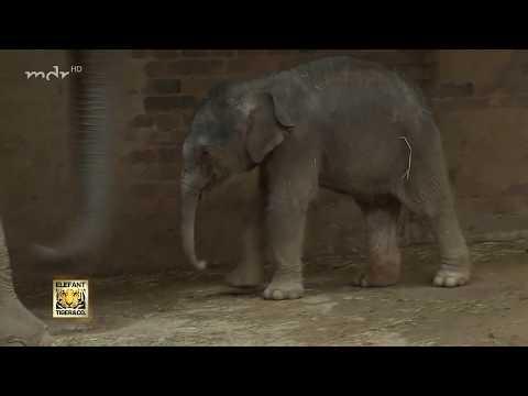 Elefantenbaby im Zoo Leipzig
