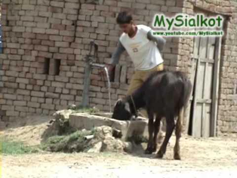 Sialkot village life!