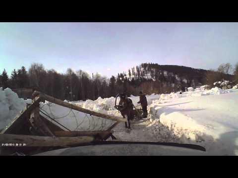 Авария с участием лошадей (никто не пострадал!)