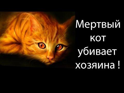 Мертвый кот убивает хозяина !