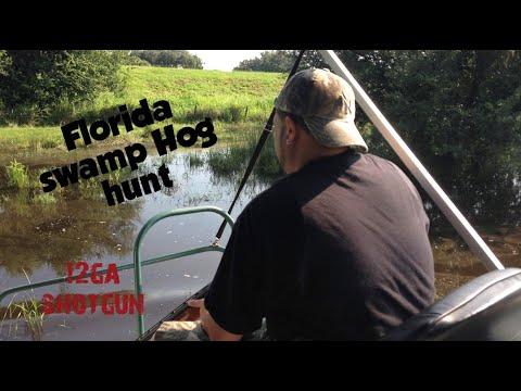 Wild Hog / Boar hunt with 12ga Shotgun 00 from a Swamp Buggie Central Florida.
