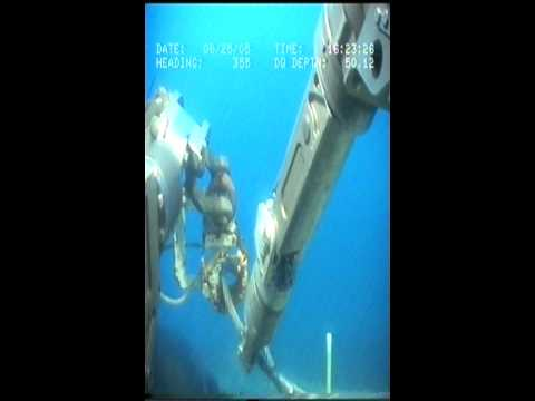 Seal Playing Subsea - ROV Footage