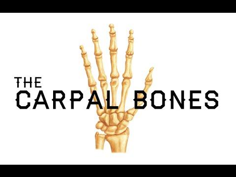 Human skeleton - Hands and feet | Britannica.com