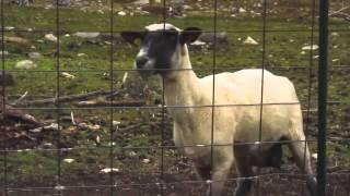 download lagu Dvbbs-raveheart Goat Remix gratis