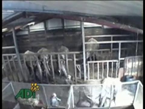 Violencia y Abuso Contra Animales En Circos