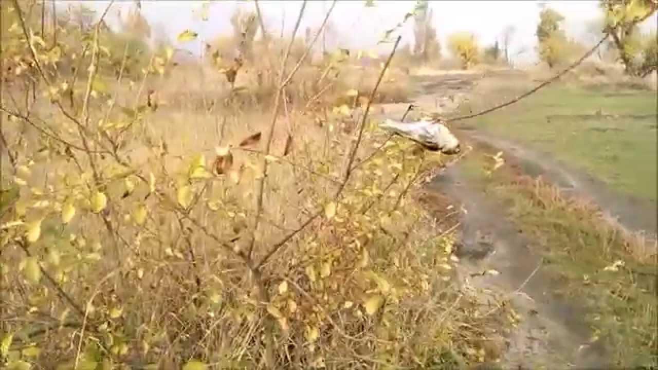 ловля вьюрка видео