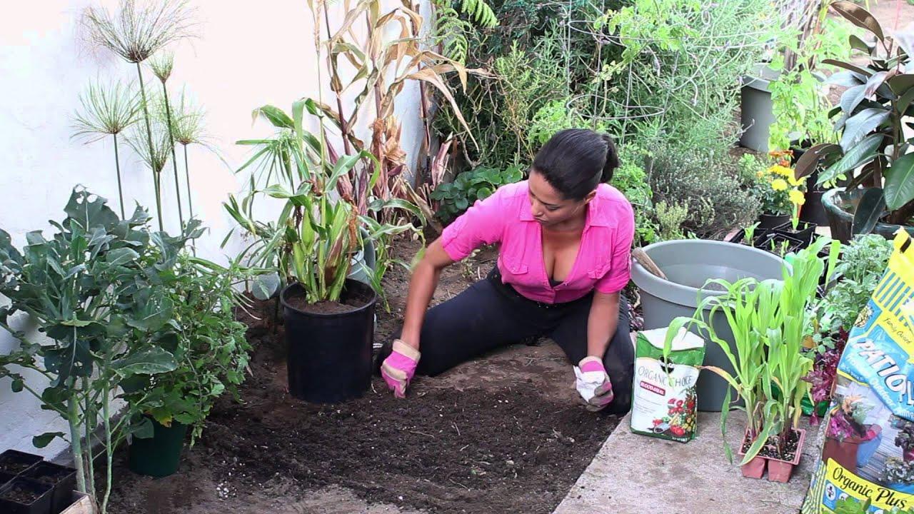 How To Grow Anasazi Sweet Corn The Chef S Garden Youtube