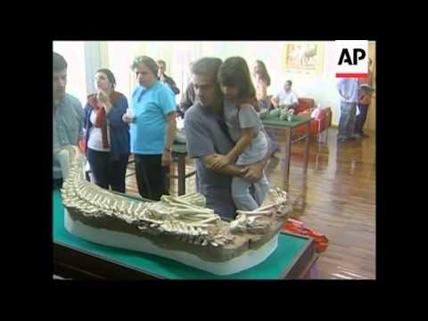 Prehistoric crocodile fossils discovered