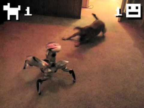 Puppy Vs. Robot! Epic Battle For Territorial Domination! Video