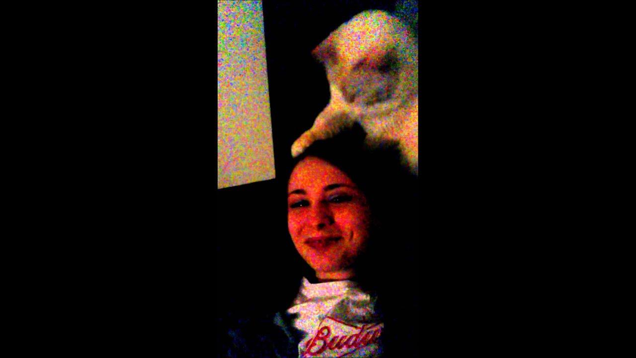 Cockatoo Petting Cat Lol my Cat Tries Petting me