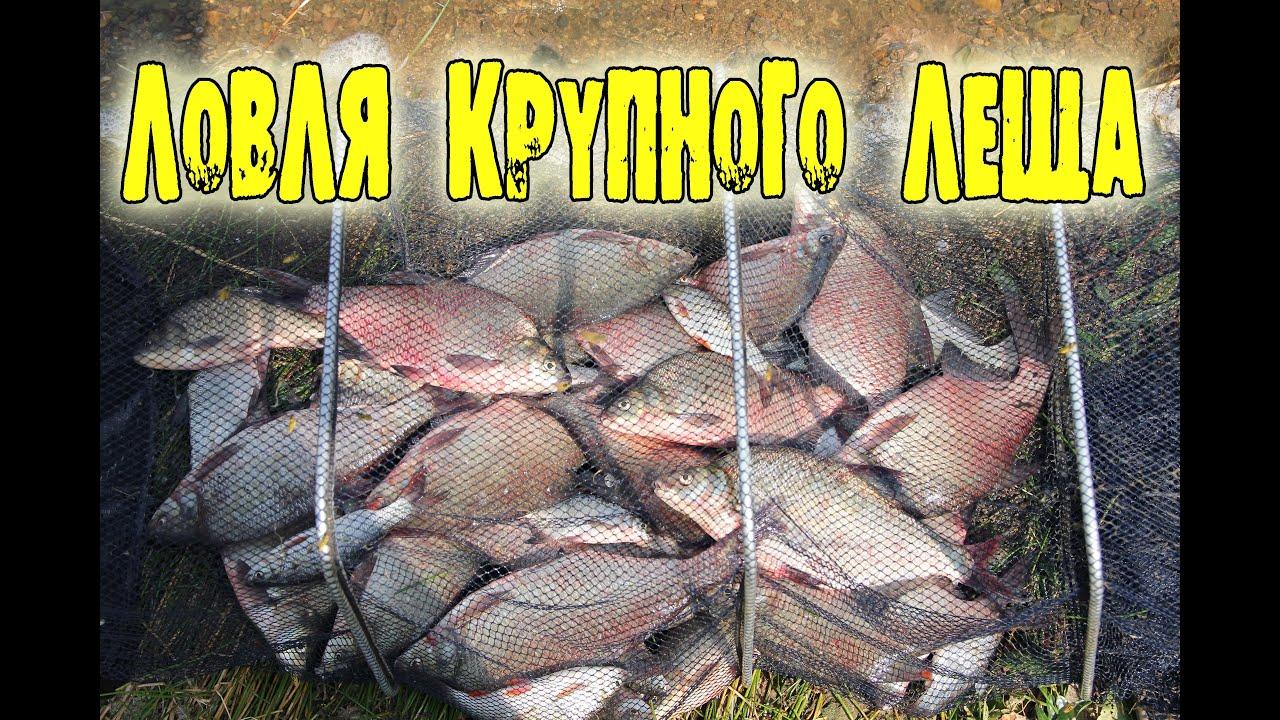 видео осенняя рыбалка на леща