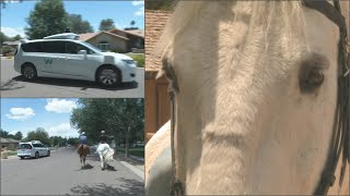 Retired police horse helps test Waymo self-driving cars in Tempe