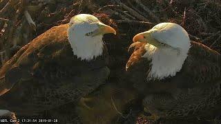 Live Bald Eagle Nest Cam, We got an Eaglet!! NEFL PTZ Cam 1