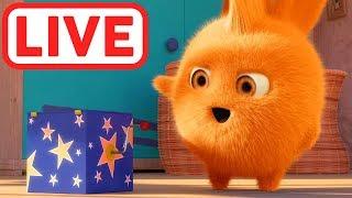 Sunny Bunnies LIVE | La grande avventura | Cartone animato per bambini | WildBrain