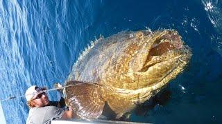 GOLIATH GROUPER!!! BEST SLOW MOTION FISHING ATTACKS VIDEO??? FAVORITE YOUTUBER OCEAN FISHING VIDEO