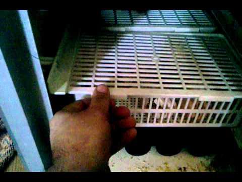 civciv üretimi evde nasıl yapılır