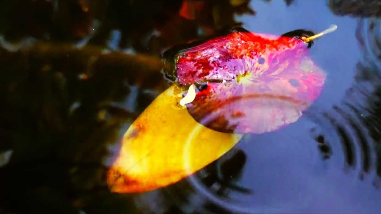 Sky fish pond native american flute music youtube for Koi pond music