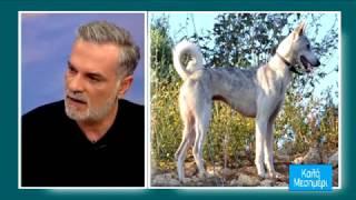 Κρητικός Λαγωνικός: o πρωτόγονος κυνηγετικός σκύλος της Κρήτης