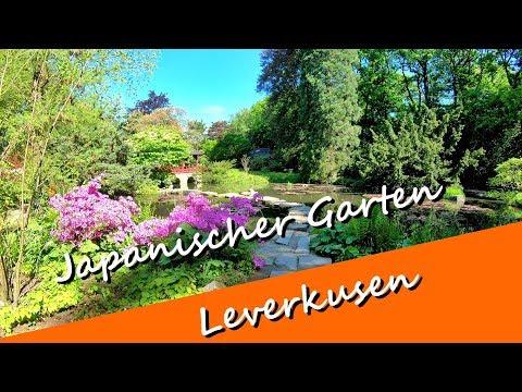 Japanischer Garten in Leverkusen Anfang Mai 2018 - Sind noch viele blühende Pflanzen zu sehen?
