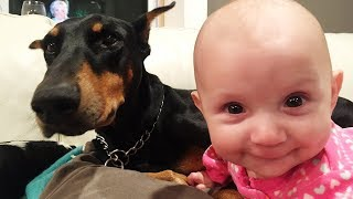 Doberman Playing With Baby - Sweetest Friendship of Baby and Dog
