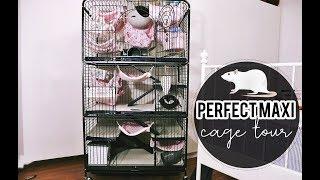 🏠 MOJE SZCZURY MIESZKAJĄ LEPIEJ NIŻ JA! 🏠- Perfect Maxi Cage tour
