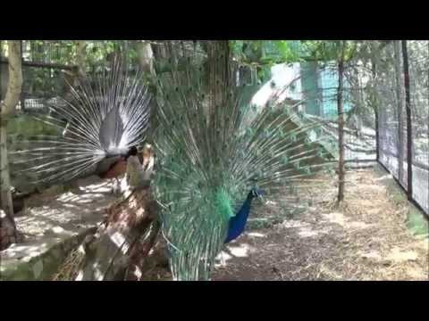 Зоопарк Сказка (г. Ялта, Крым) - 03.05.14