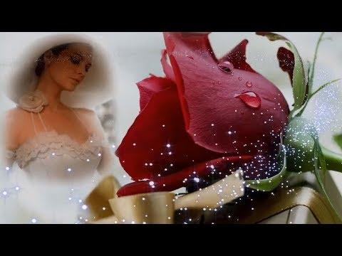 Лучшие фото Розы