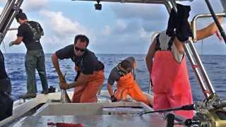 Deep Sea Ahi Catching