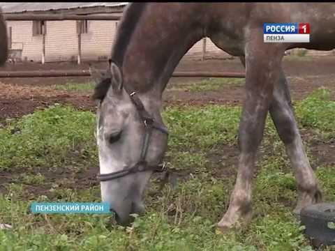 В Пензенской области девушка спасла более 50 лошадей от забоя