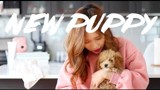 First Puppy Haul Guineapigfans