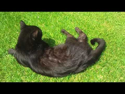 Cute Black Pussy Cat video