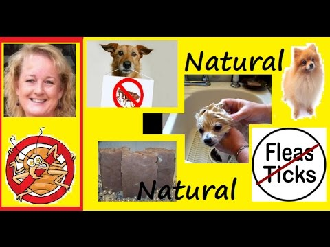 Essential Soap: How to kill Fleas on Dog with Homemade Lye Soap, Anal Glands,Tape Worms,Soap Making