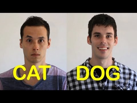 Cat-friend Vs Dog-friend 2 video