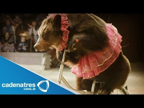 Casos de maltrato animal en circos / Cases of animal abuse in circuses