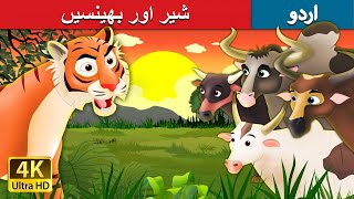 شیر اور بھینسیں | Tiger and Buffaloes Story in Urdu | 4K UHD | Urdu Fairy Tales