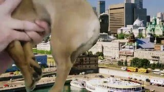 Green Screen Dog......Rocket: Lost in Time!