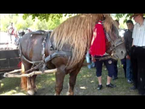 cai din bucovina