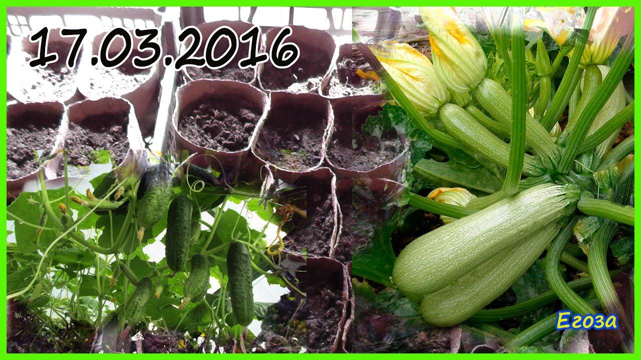 Выращивание огурцов и кабачков 584
