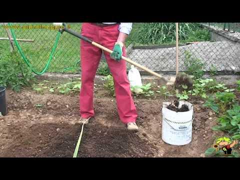 Coltivare pomodori videolike for Scacchiatura pomodori