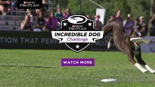 Dog Frisbee Competition - Purina Pro Plan Incredible Dog Challenge