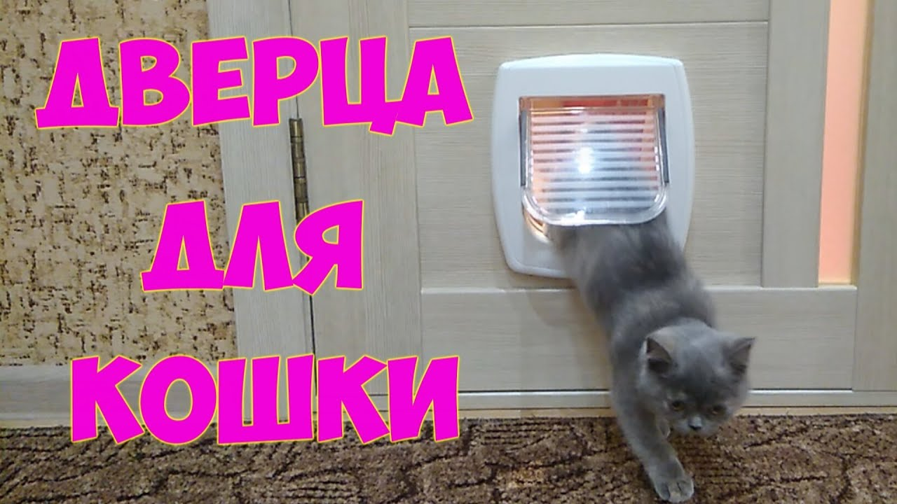 Дверца для кошек своими руками фото пошагово 13
