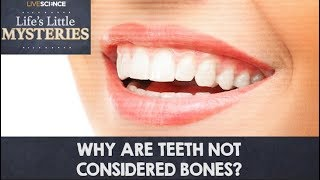 Why Are Teeth Not Considered Bones?