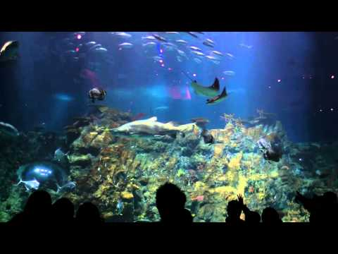 Grand Aquarium - Aqua City, Ocean Park - Hong Kong (香港海洋公園夢幻水都海洋奇觀)