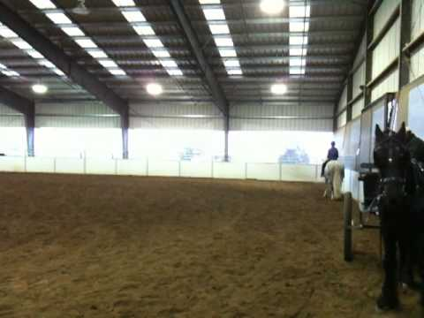 Kristen Does Dressage - Part 1 Video