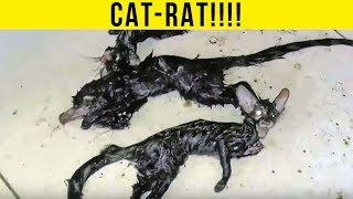 5 Nightmare Creatures Caught Outside of People